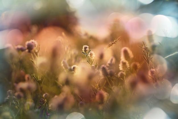 초원에 화창한 날