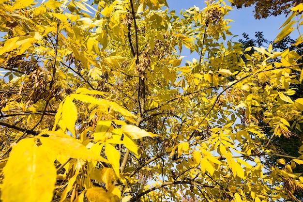 秋の日差しが木の葉を照らす晴れた日