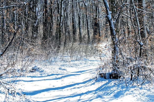 Sunny day in the winter forest with shades from the trees in the snow
