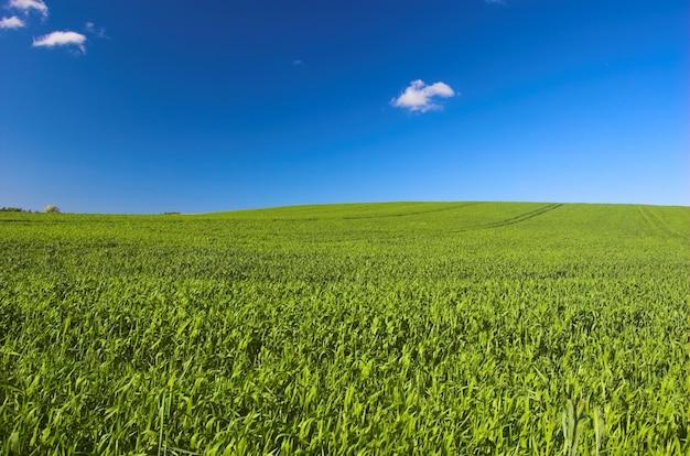 Солнечный greenfied