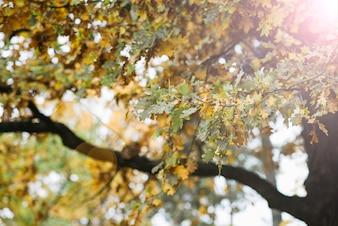 森林の秋の木に晴れた葉