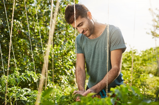 Sunny morning in garden. close up of young good-looking mature hispanic male gardener in blue shirt smiling, working in garden, cutting off dead leaves.