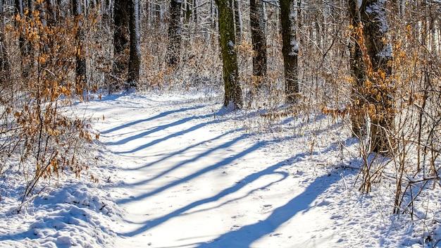 冬の森の晴れた朝。森の冬