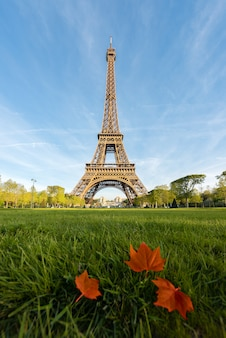 Sunny morning in paris and eiffel tower with maple leaf at paris, france.