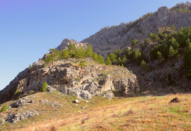 Солнечный горный склон в золотом утреннем свете в траве алтая и сосны на скалах