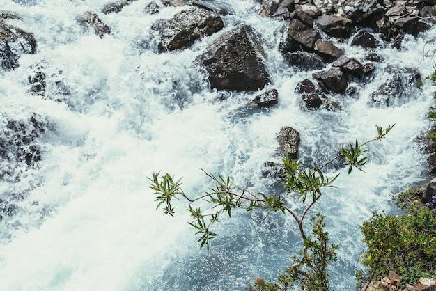 ぼやけた乱流のマウンテンクリークの澄んだ紺碧の水面の上に柳の木の枝と日当たりの良い自然の背景。山の植物の間で渓流からの美しいボケ味。柳の木の枝。