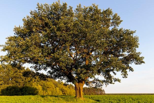 木々が葉の色を変える晴れまたは曇りの秋