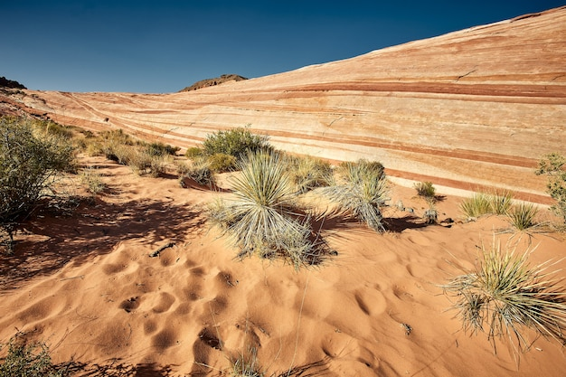 Sunny scenery of the valley of fire state park in nevada, usa Free Photo