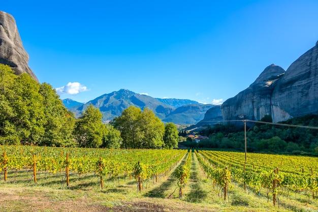 ギリシャのカランバカの岩で晴れた夏の日。メテオラの岩の修道院に属するブドウ園