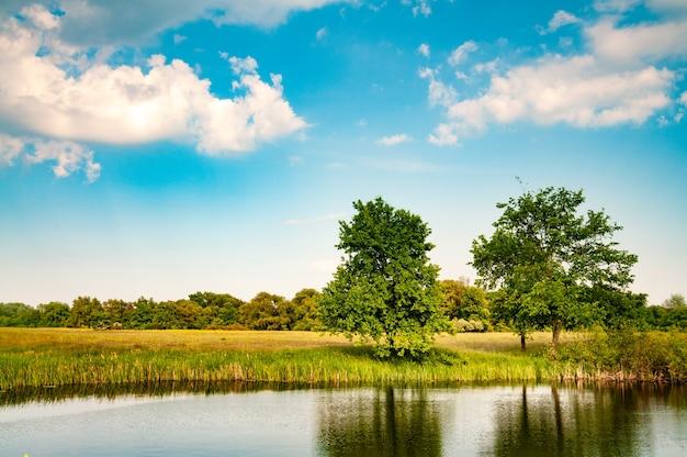 暖かい夏の日に湖と緑の草の近くの美しい森と野原と晴れた夏の風景