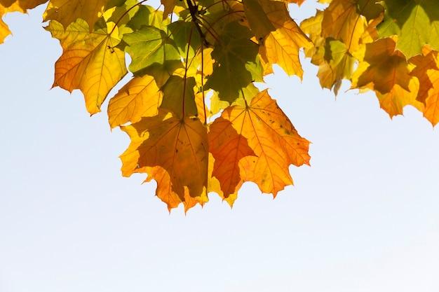 단풍 나무 가을 공원에서 화창한 날씨
