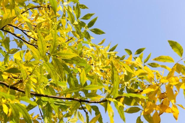 공원에서 가을 시즌의 맑은 날씨, 자연의 아름다운 밝은 가을 날씨
