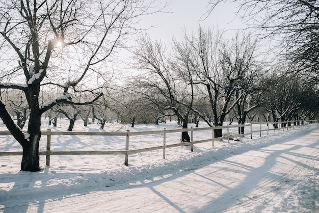 Солнечный зимний день в заснеженном парке