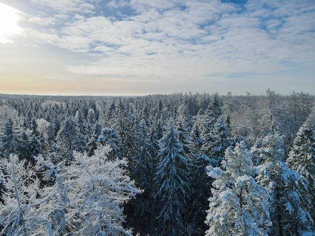 Солнечный зимний лес с высоты птичьего полета в солнечный день.