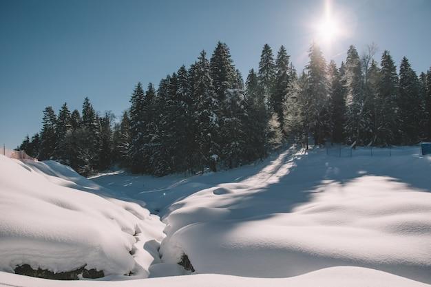 숲에서 맑은 겨울