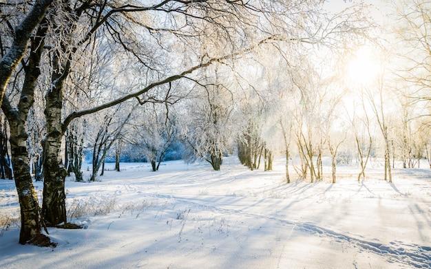 Sunny winter scenery