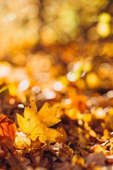 日差しが森の地面を覆う乾燥した金色のブナの葉を照らす