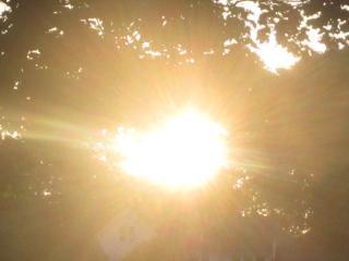 Sunrays alberi