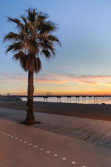 遊歩道の大きなヤシとポンツーンの青い空と昇る太陽の魔法の色の海岸線の眺めの日の出