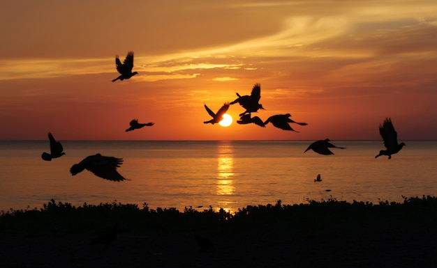 Sunrise on beach with birds, samila beach songkhla, thailand
