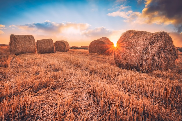 Sunrise over a field covered with hay bales.