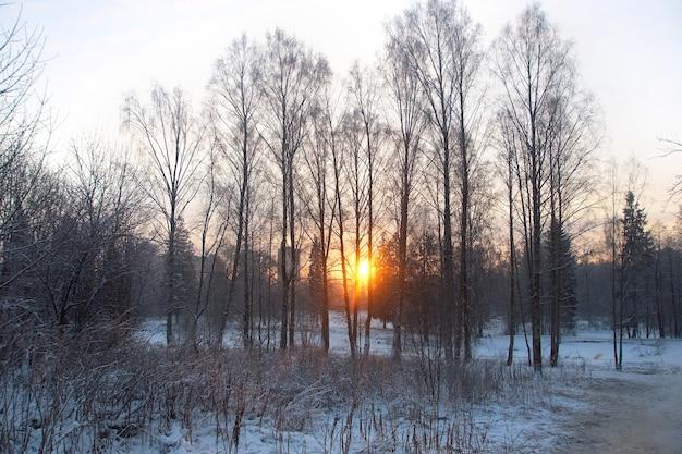 겨울 공원에서 일출, 광선은 나무, 서리를 통과합니다.