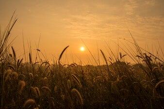 Sunrise in meadows