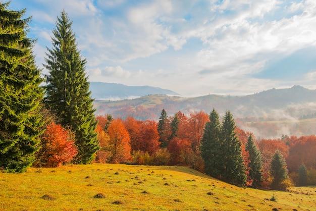 山の森と曇り空の日の出