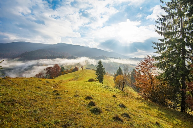Восход солнца в горном лесу и облачное небо