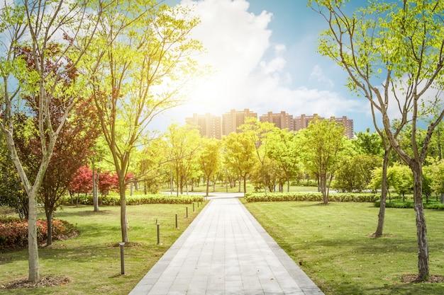 美しい公園の日の出