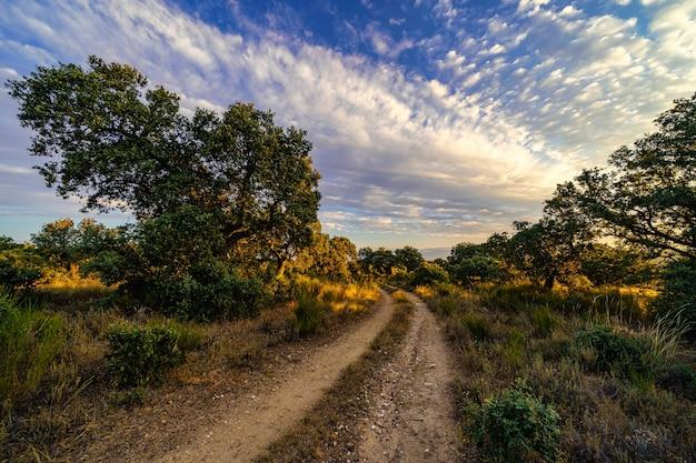 Восход солнца в поле с каменными дубами и грунтовой дороге между деревьями.