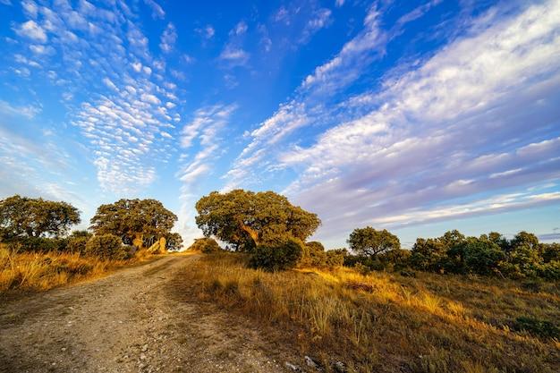 Восход солнца в поле со средиземноморскими лесными дубами.