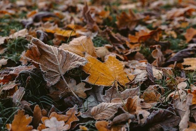 Восход солнца в парке и туман, начало зимы, крупным планом на замерзшем листе