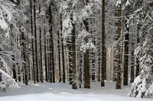 겨울 침엽수 림의 일출 우크라이나의 겨울