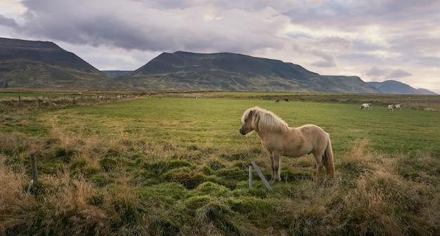 녹색 초원과 산에 말과 함께 일출 풍경