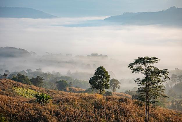 日の出の霧は田舎の冬の霧の風景の森で山の背景をカバーします