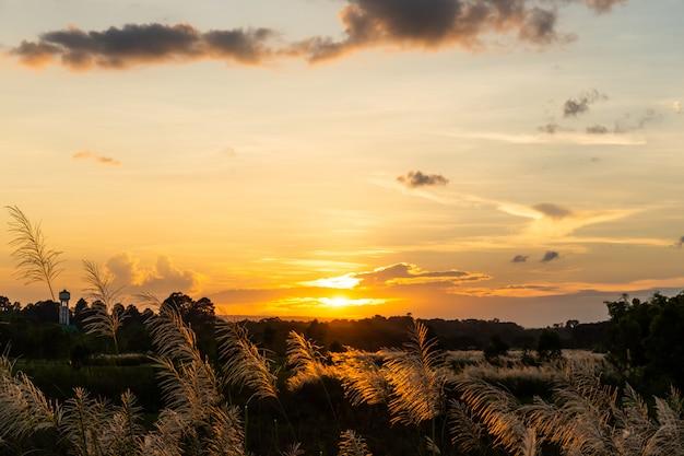 Sunrise in the morning.