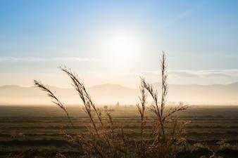 Sunrise on field mountain