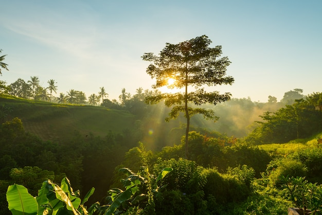 Восход солнца над джунглями бали