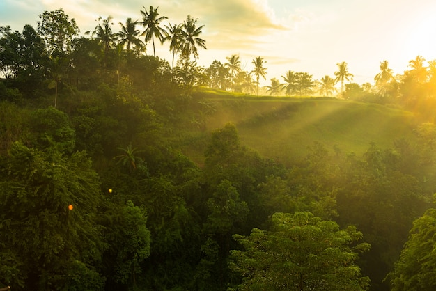 정글 위로 일출