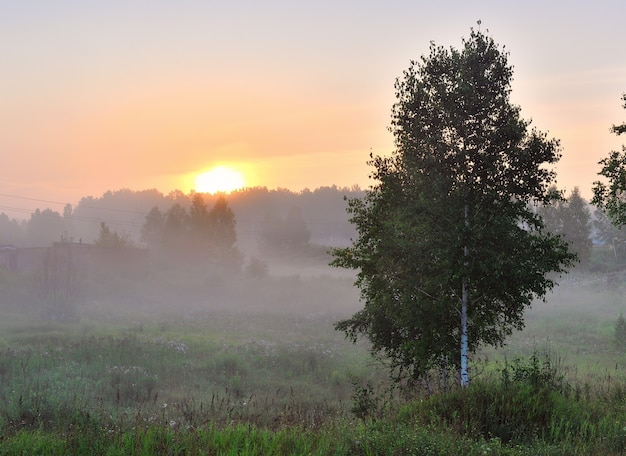 Sunrise over the trees in the fog