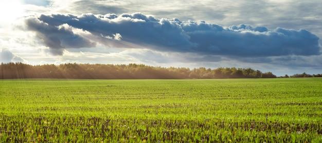 緑の野原を照らす太陽光線