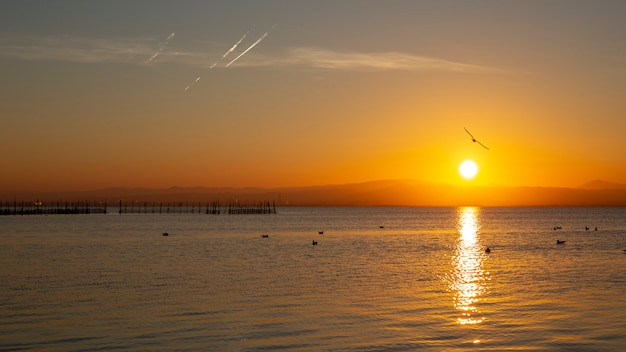 Sunset in albufera of valencia with seagulls in the water.