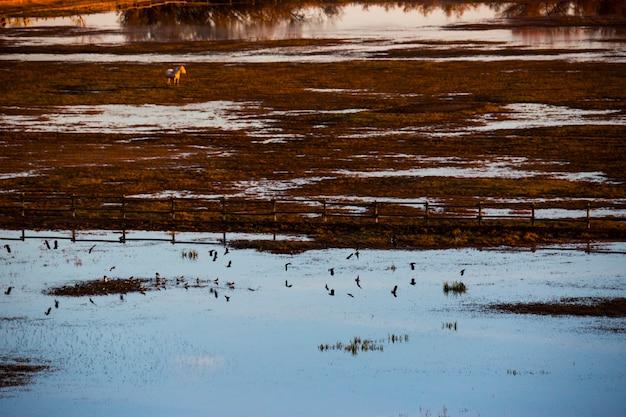 スペイン、アイグアモルスデレンポルダ自然保護区の夕日と鳥。