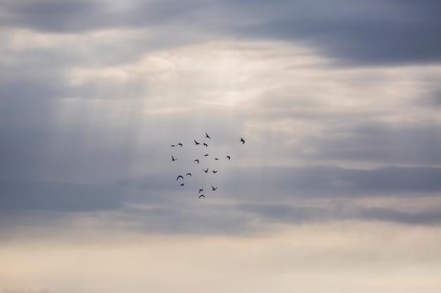 Закат и птицы в заповеднике айгуамольс-де-л'эмпорда, испания.