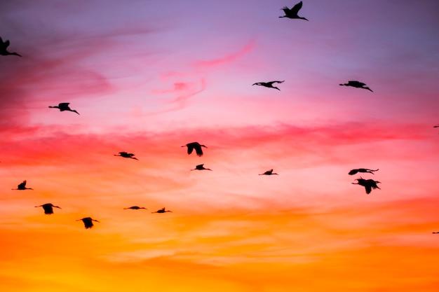 スペインのaiguamollsde l'emporda自然保護区の日没とツル(ツル科)。