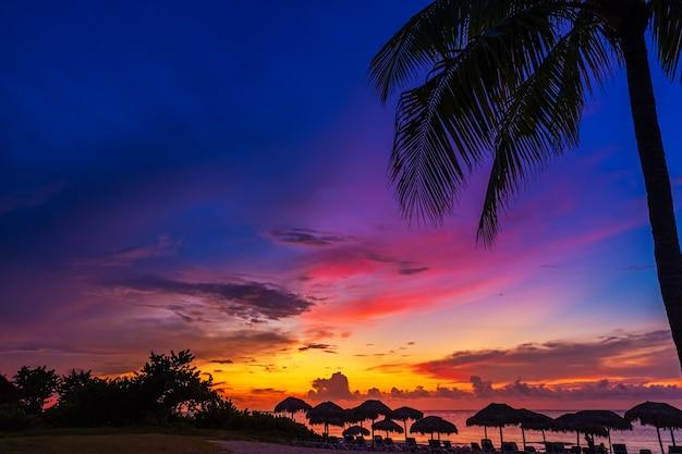 Закат и пальмы - фон природы.