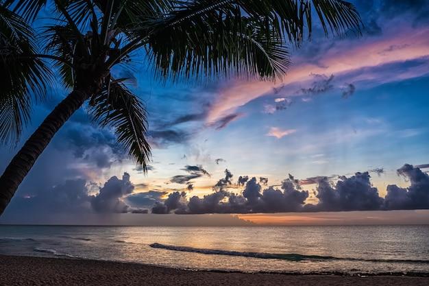 Закат и пальмы - природа фон