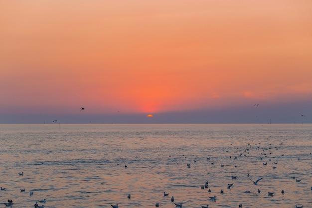 Закат и вид на море вечером, пока чайки летают по поверхности моря.