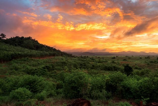 タイの夕日と野生の森